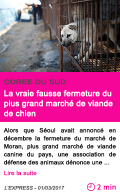 Societe la vraie fausse fermeture du plus grand marche de viande de chien