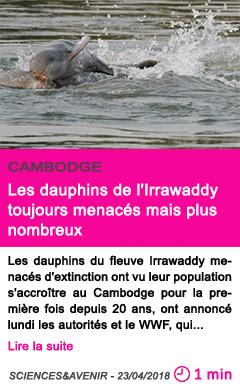 Societe les dauphins de l irrawaddy toujours menaces mais plus nombreux