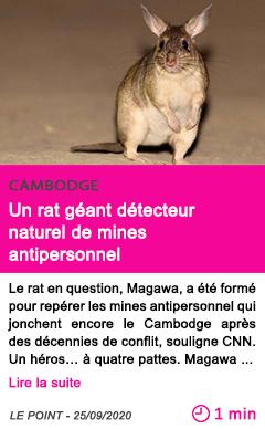 Societe un rat ge ant de tecteur naturel de mines antipersonnel